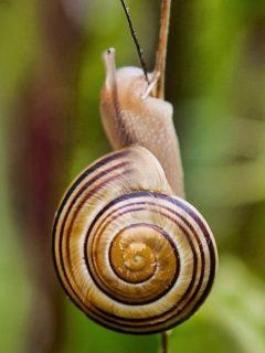 Garden-Snail-Eating-Plant-Stem