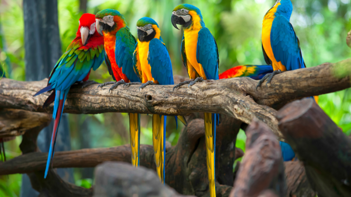 Five Parrots standing on tree branch