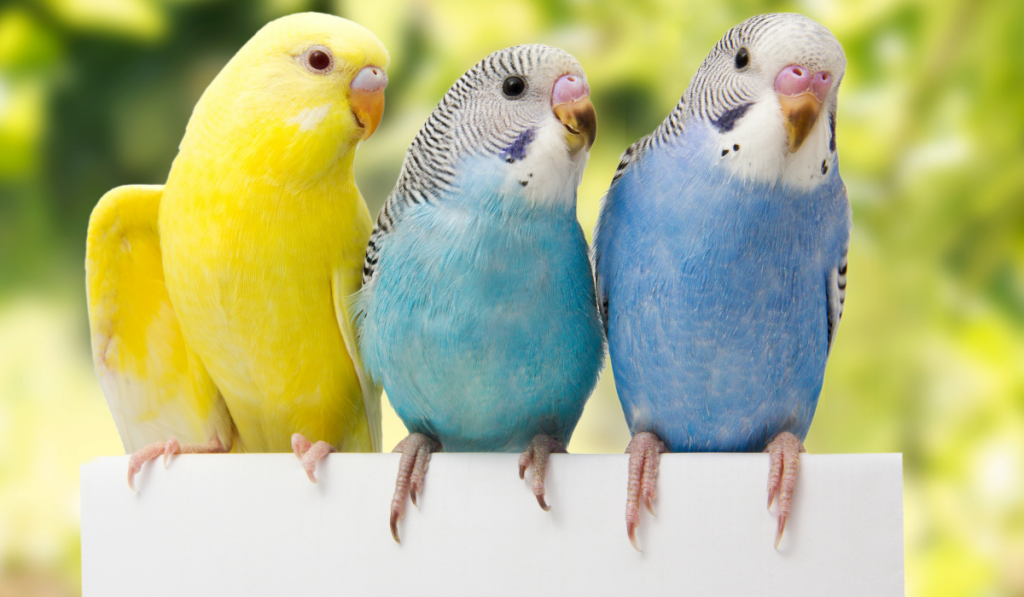 Three birds standing with green background