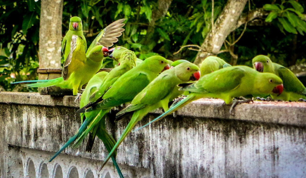 Group of Parrots eating