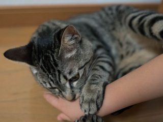 cat-playing-with-a-human-hand