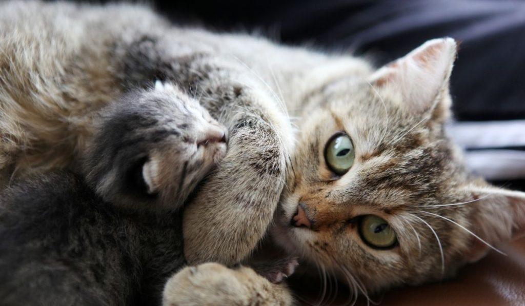 mother-and-baby-cat