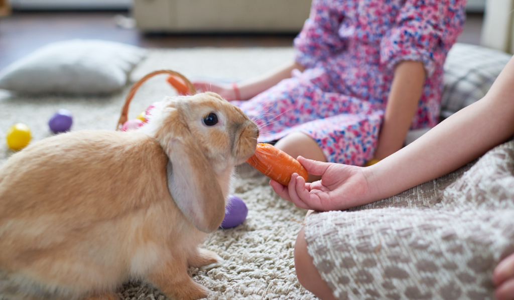A rabbit being fed with a carrot in the living room with two kids.