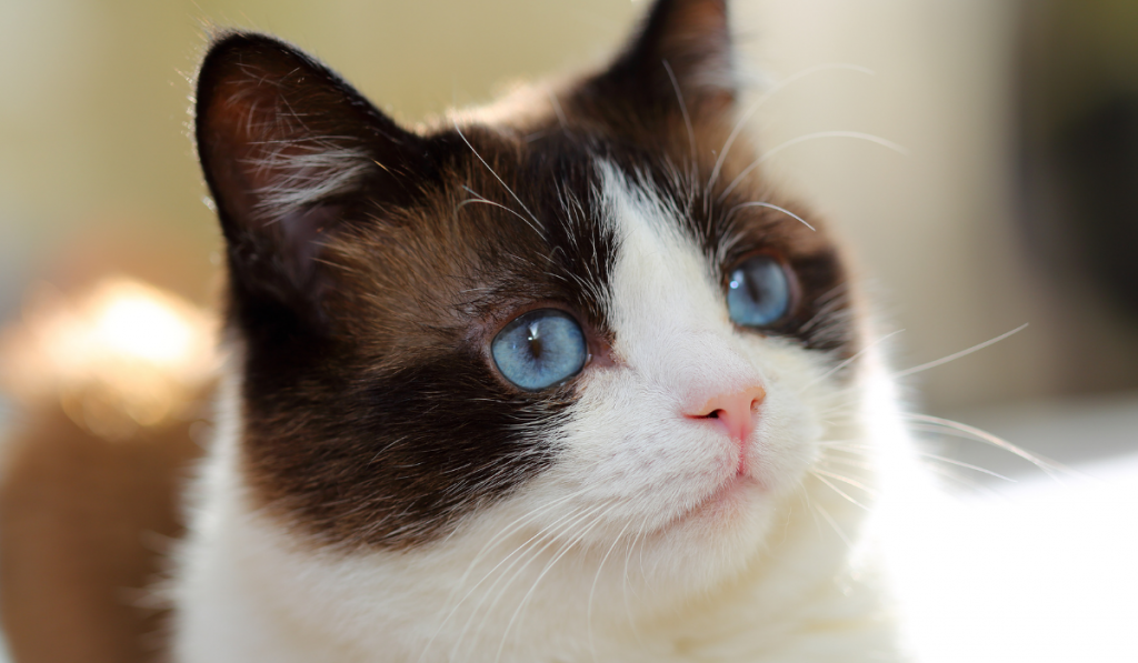 Closeup picture of a cat with blurry background.