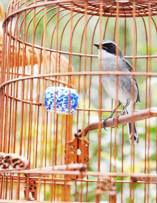 bird in a golden cage