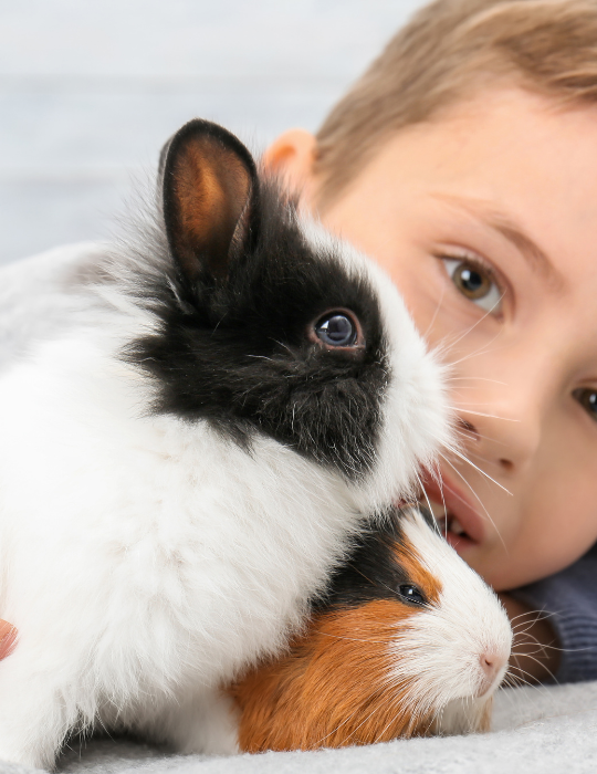 rabbit-and-boy